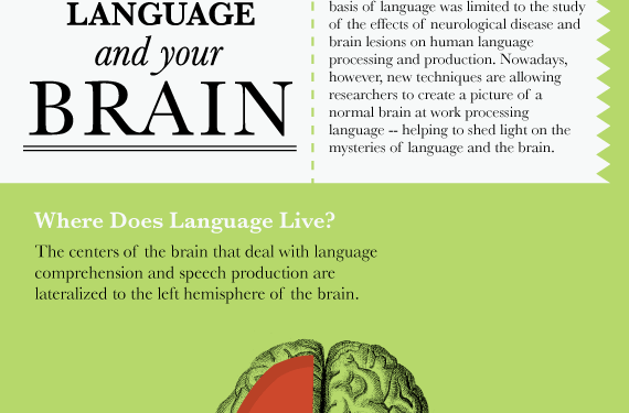 Language and Your Brain [INFOGRAPHIC]