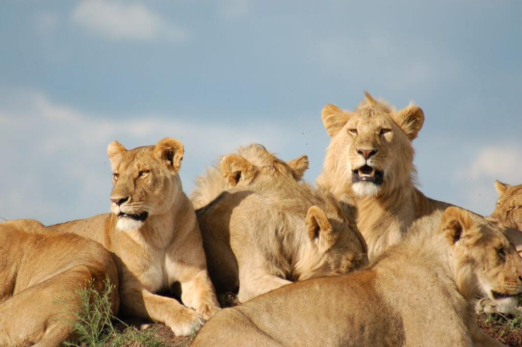 collective pride What are collective nouns (with examples) a collective noun is the word used to represent a group of people,  a pride of lions common collective nouns used for.